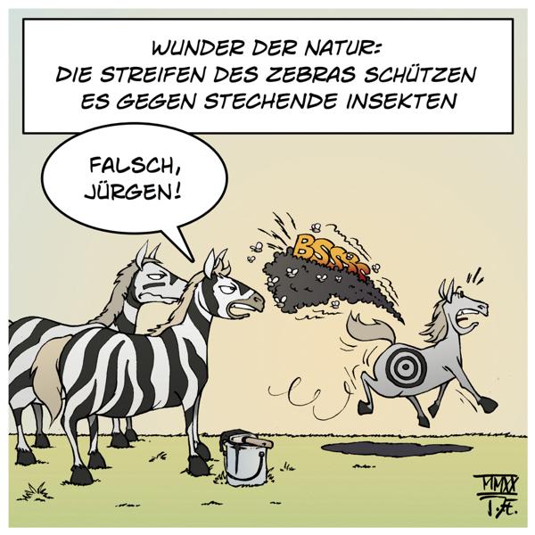Natur Biologie Wissenschaft Forschung Pferde Zebras Zebrastreifen Insekten Mücken Bremsen Pferdebremsen Insektenschutz Tarnung Streifen Umwelt Umweltschutz Naturschutz Klimaschutz Tiere Fauna